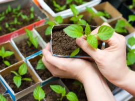 Садоводство: разновидности удобрений