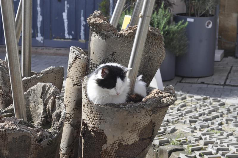 Как сделать балкон максимально безопасным для кошки?