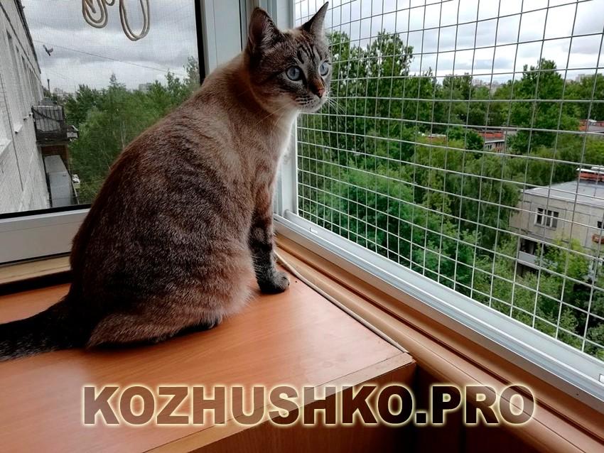 Выгул для кошки на окне